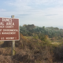 Florida scrub dunes, Atlantic coast